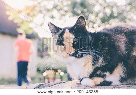 Cat on the village wood table in sunny day