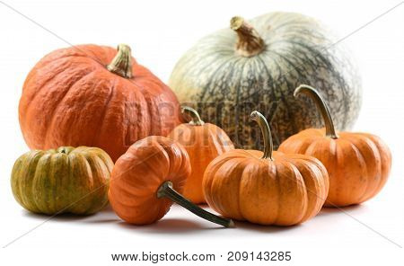 Harvest stillife. Colorful collection of imperfect orange and green organic pumpkins isolated on white background closeup