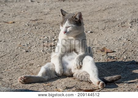 Adorable beautiful  cat in funny pose close up