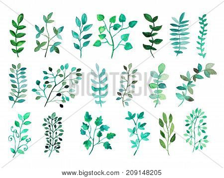 Decorative watercolor leaves clipart design elements. Can be used for wedding baby shower mothers day valentines day cards invitations. Painted floral branches