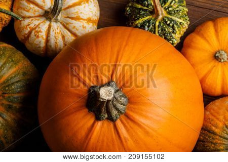 Many various pumpkins background, Halloween or Thanksgiving day concept