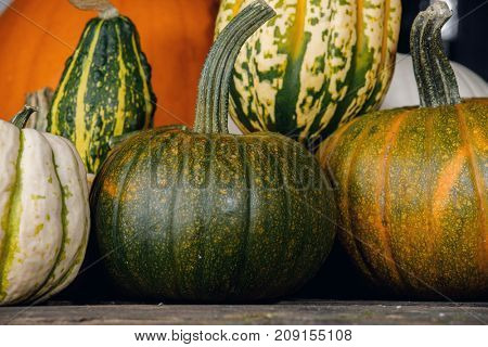 Many pumpkins on dark wooden background, Halloween or Thanksgiving day concept
