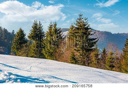 spruce trees on a snowy mountain slope. beautiful winter scenery on a bright sunny day