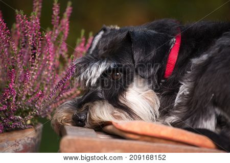 Cute Dog Resting In Garden