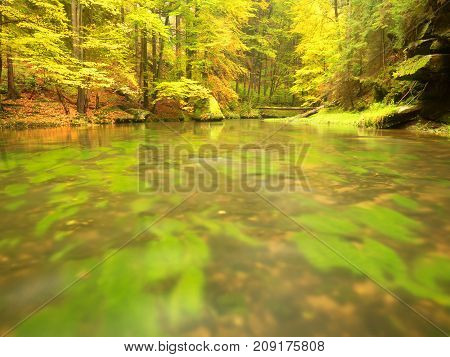 Autumn Colorful Forest Above Mountain River. Water Under Leaves Trees With Yellow Orange  Reflection