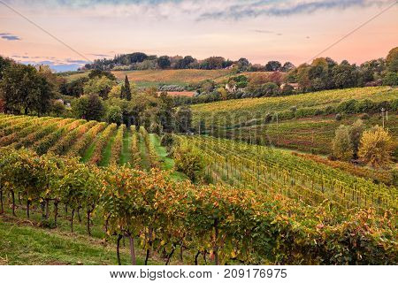 Faenza, Ravenna, Emilia Romagna, Italy: landscape at dawn of the countryside with vineyards for wine production on the Italian hills