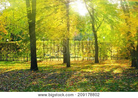rays of the sun make their way through trees and bushes in the autumn park. Excellent autumn weather