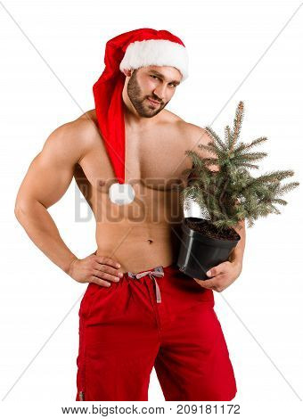 Portrait of a macho man in Santa costume with a small Christmas tree. Isolated on white background. Close-up. Concept of holidays.