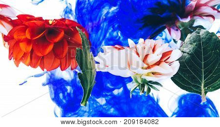 Levitating beautiful flowers under water on bright background. Colorful flower background.