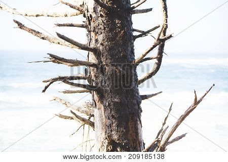 Barren Tree Near Bright Ocean