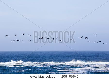 Flock of migratory birds flying over waves of the Pacific Ocean near Newport Oregon USA.