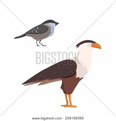 Popular birding species collection vector isolated illustration.