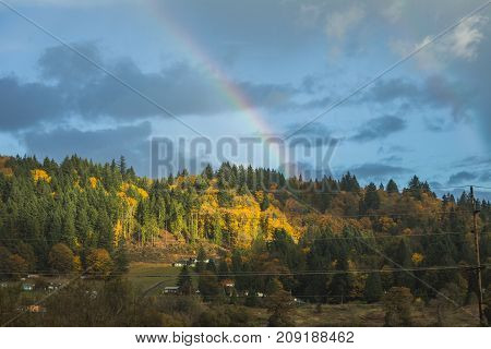 Rainbow Over Fall Trees