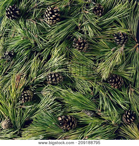 Creative background of pine branch. New Year and Merry Christmas Concept. Flat Lay