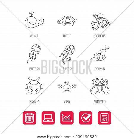 Octopus, turtle and dolphin icons. Jellyfish, whale and ladybug linear signs. Crab, butterfly flat line icons. Report document, Graph chart and Calendar signs. Laptop and Check web icons. Vector