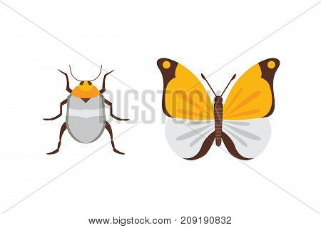 Set of different insects in cartoon style. Butterfly and beetle