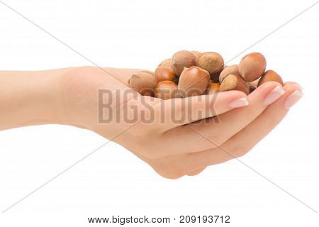 Female hand walnut on white background isolation
