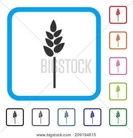 Wheat Ear icon. Flat gray pictogram symbol in a light blue rounded square. Black, gray, green, blue, red, orange color versions of Wheat Ear vector. Designed for web and software interfaces.