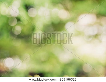 Defocus Nature Green Bokeh Background With Environment Concept.