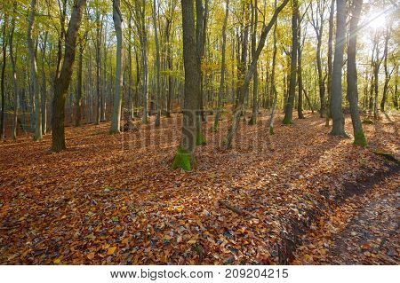 Forest with colorful autumn leaves