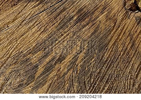 Old tree trunk texture, with annual rings