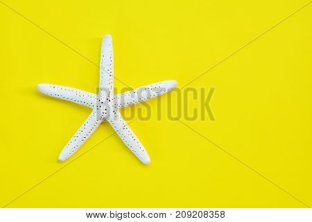 starfish on a yellow background with copy space