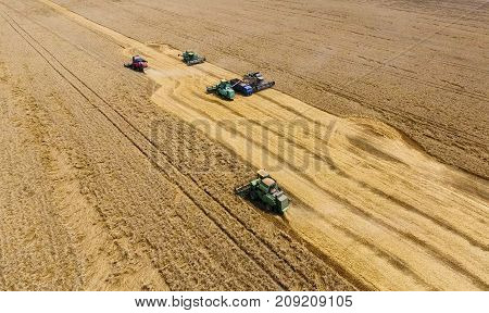 Harvesting Wheat Harvester. Agricultural Machines Harvest Grain