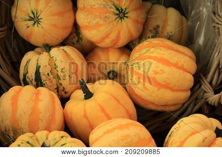 Various sorts of pumpkins for fall decorations