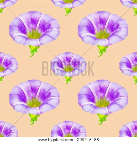 Calystegia sepium larger bindweed. Texture of flowers. Seamless pattern for continuous replicate. Floral background photo collage for production of textile cotton fabric. For use in wallpaper covers