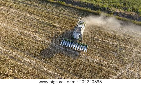 Harvester Harvests Corn. Collect Corn Cobs With The Help Of A Co