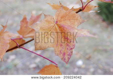 autumn landscape in the period of Golden autumn in the middle latitudes