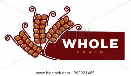 Whole grain product emblem with ripe long spike and sign on rectangle isolated cartoon flat vector illustration in brown color on white background. Promotional label for food on cereals base.