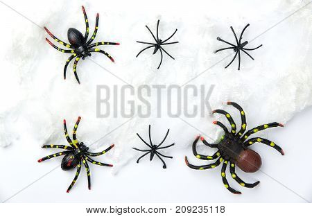 Halloween holiday concept group of spider walk on spider web on white background. Ready for product display montage