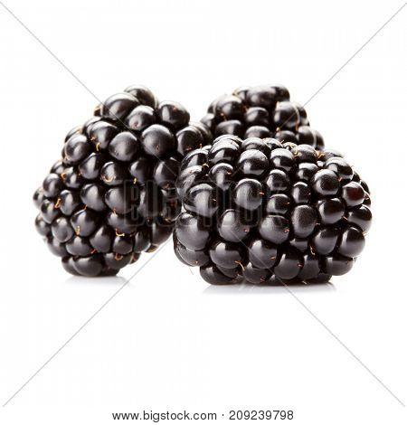 three fresh blackberry isolated