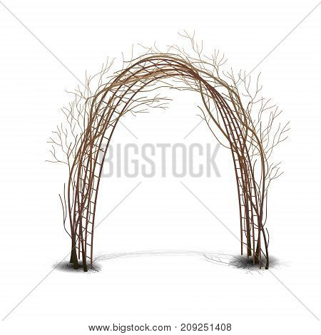 arch with bush clematis without leaves on white background