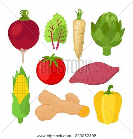 Garden vegetable set, radish, chard, artichoke, turmeric, tomato, bell pepper, sweet potato, corn. Made in cartoon flat style. Vector illustration