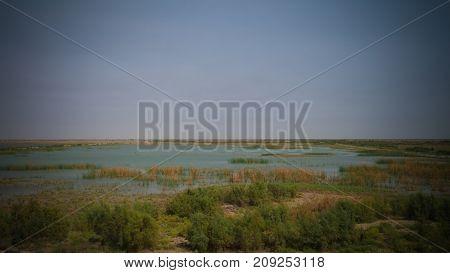 Mesopotamian Marshes habitat of Marsh Arabs aka Madans near Basra Iraq