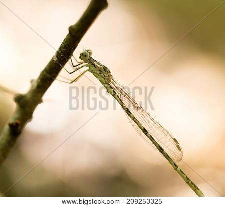 dragonfly in the park in nature. macro
