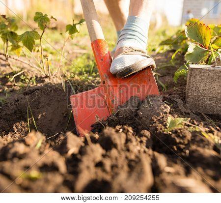 a woman digs a garden with a shovel .