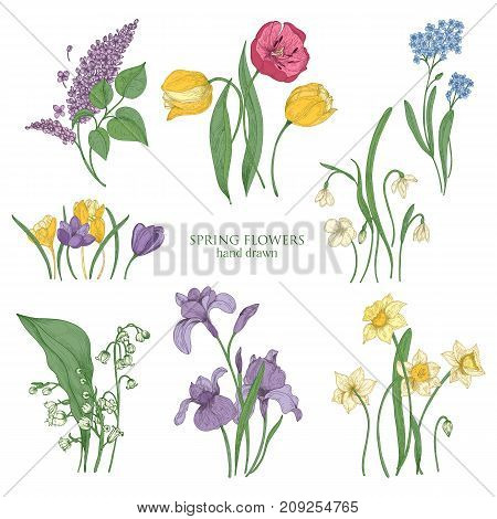 Collection of blooming spring flowers and flowering plants hand drawn in vintage style - tulip, lilac, narcissus, forget-me-not, crocus, lily of the valley, iris, snowdrop. Vector illustration