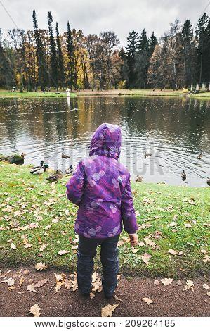 Little Girl Feeds Ducks On Pond In Park