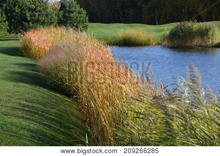 lake surrounded by reeds