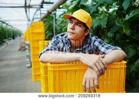 Young gardener leaning over stack of plastic boxes in greenhouse
