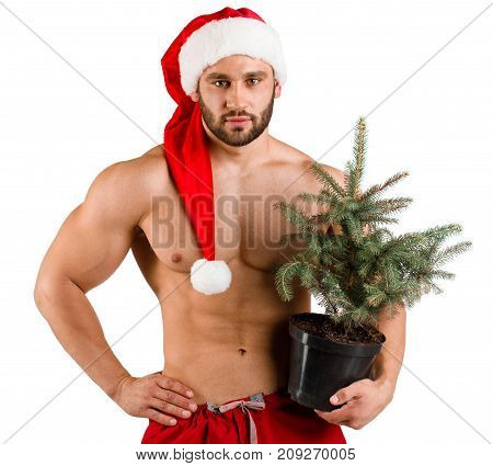 Serious strong man dressed as Santa Claus with green Christmas pot tree in his hand isolated and red and white hat, white background, alone. White background