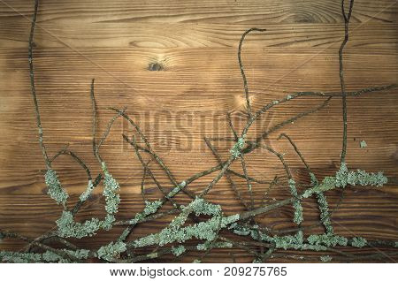 Dry arid tree branches on the wooden table surface background with copy space. Autumn background.