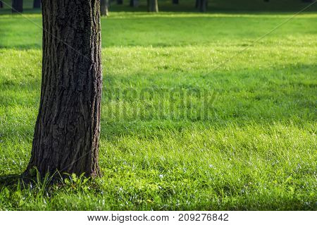 Tree trunk over green grass fresh background