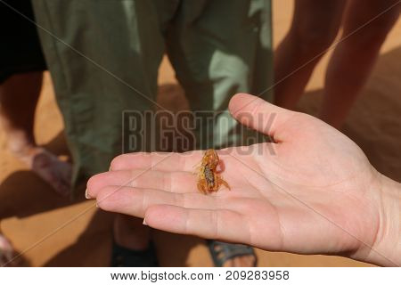 Small Scorpions Sitting On The Palm Of Person