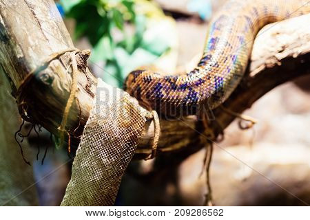 Picture of snake and its shedded skin on tree