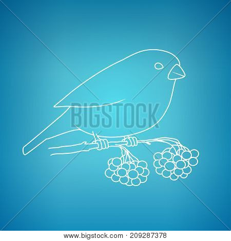 Bullfinch on a Blue Background Bullfinch Sitting on a Branch with Bunches of Rowan Christmas Decorations Drawing in Linear Style