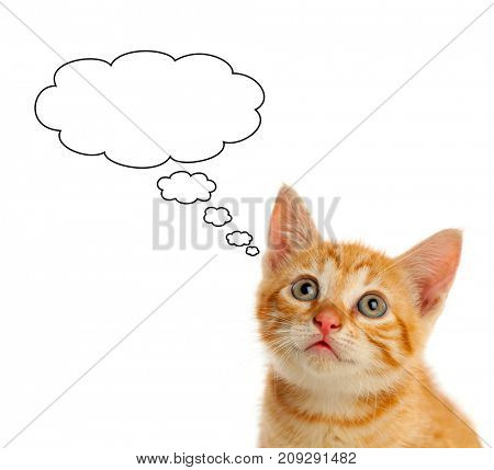 Pensive small red cat looking up isolated on a white background